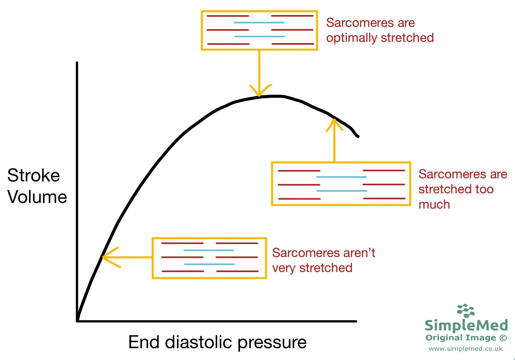 Frank Starling Curve showing Sarcomere length change SimpleMed