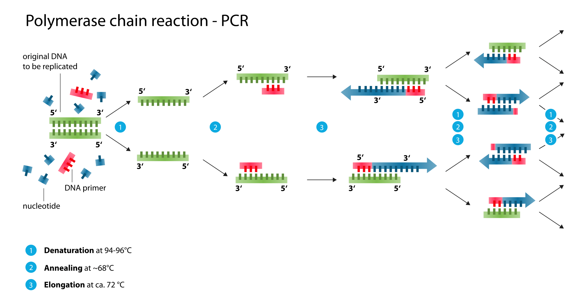 Polymerase Chain Reaction SimpleMed