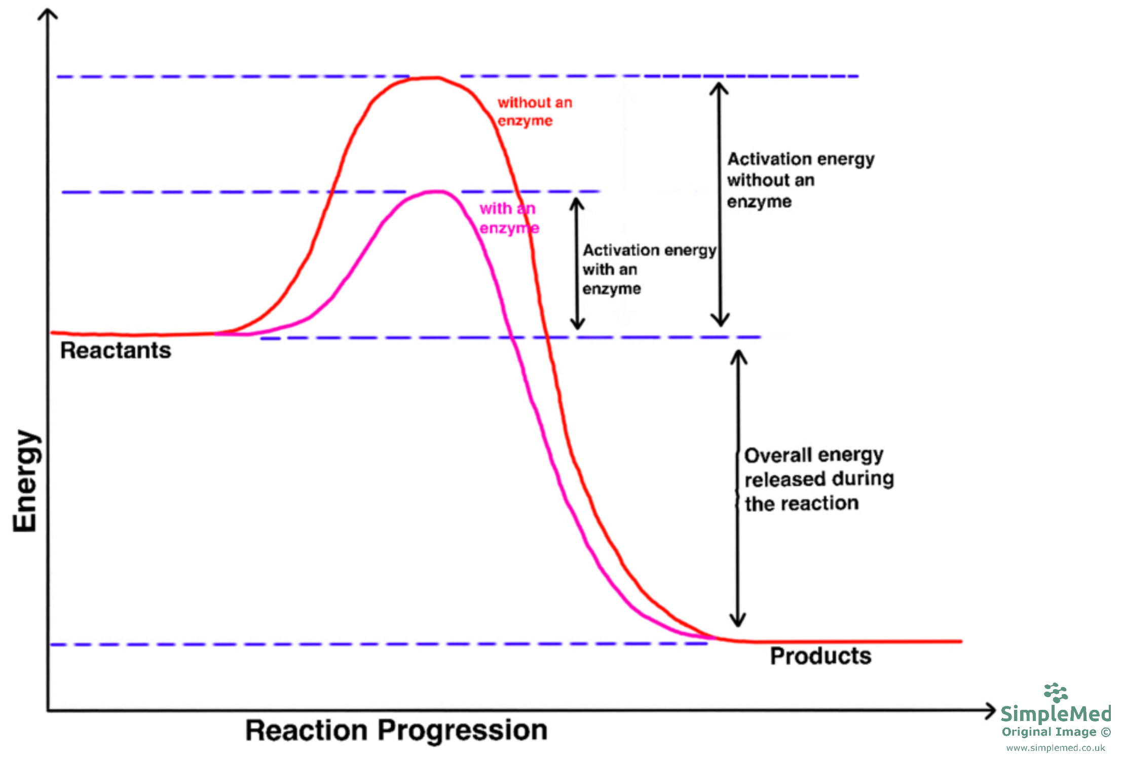 Graph of Enzymes and Activation Energy SimpleMed