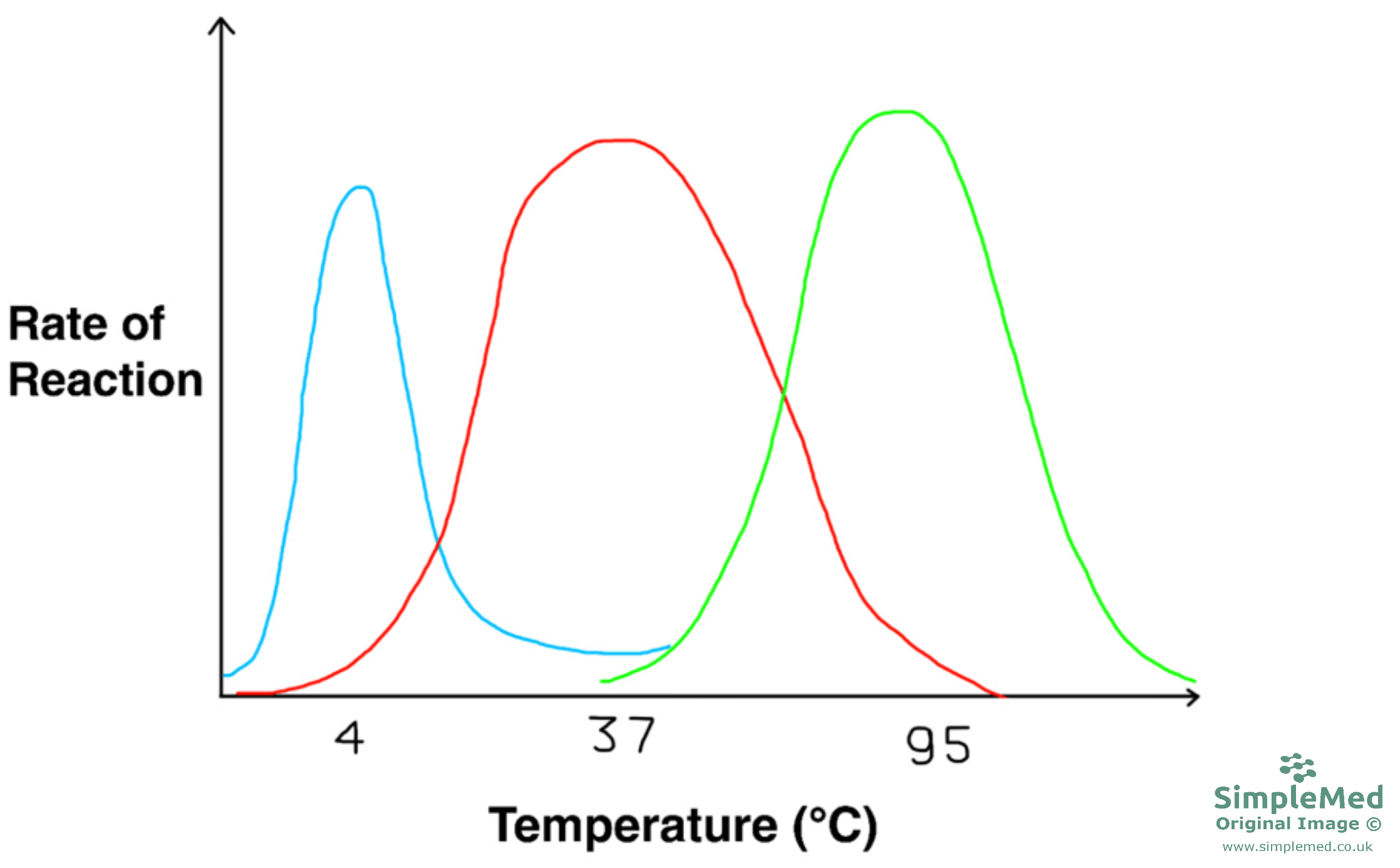 Graph of Different Enzyme Optimum Temperatures SimpleMed