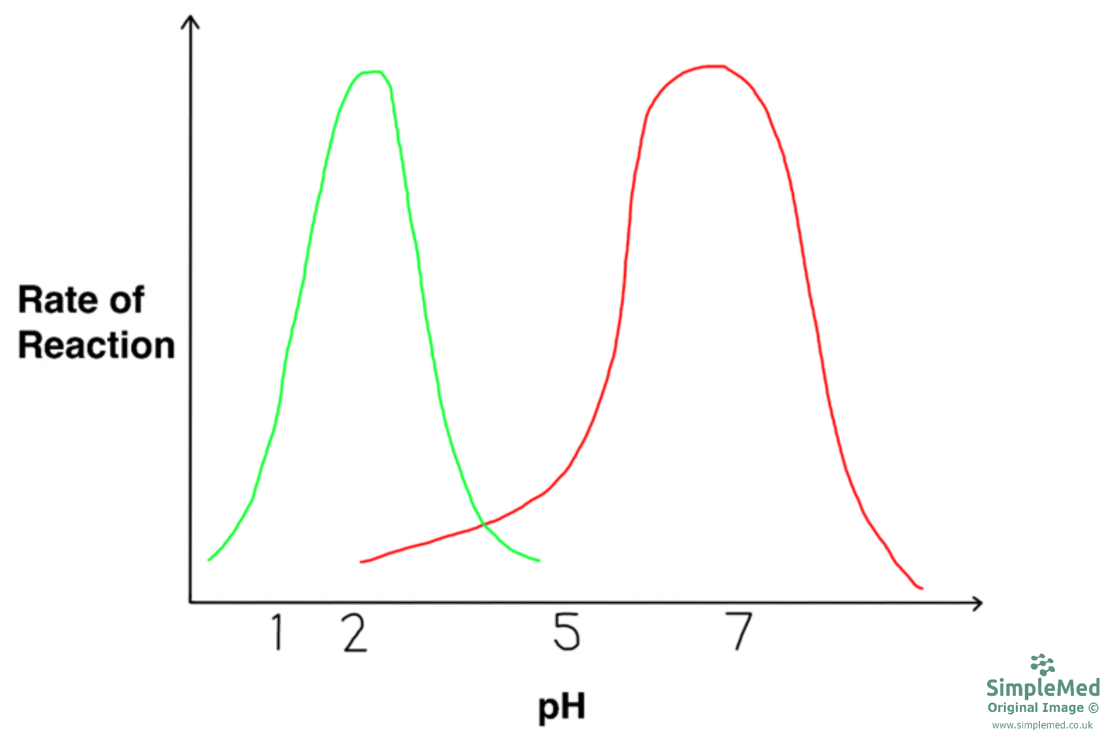 Enzyme Activity With Changes in pH Graph SimpleMed