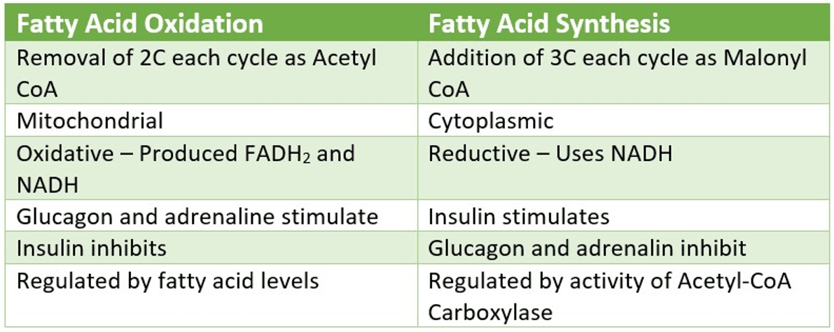 Fatty Acid Synthesis vs Oxidation SimpleMed