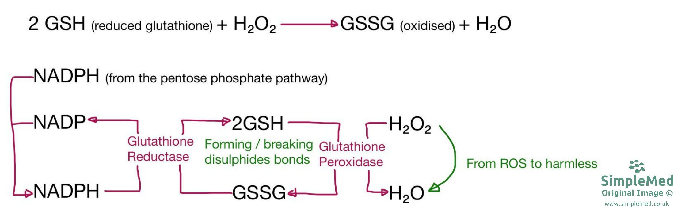 Glutathione Pathway Diagram SimpleMed