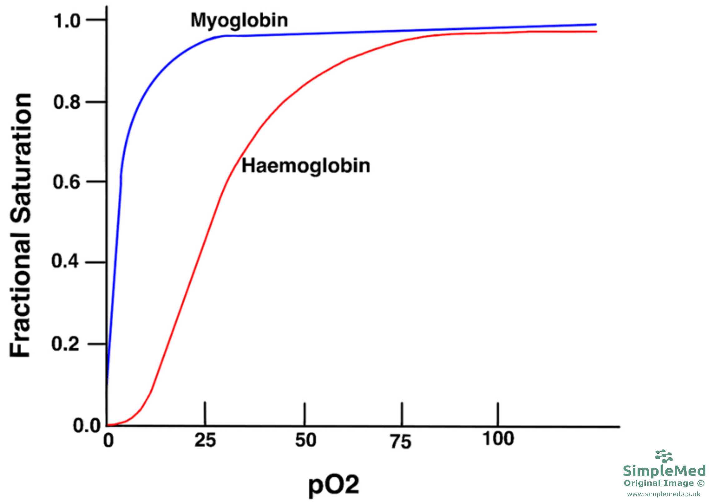 Haemoglobin and Myoglobin Oxygen Disassociation Curve SimpleMed