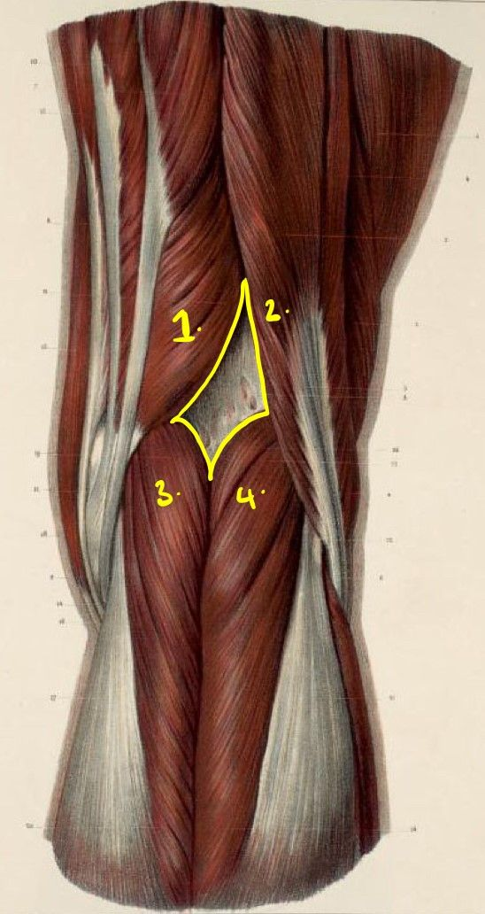 The Popliteal Fossa SimpleMed