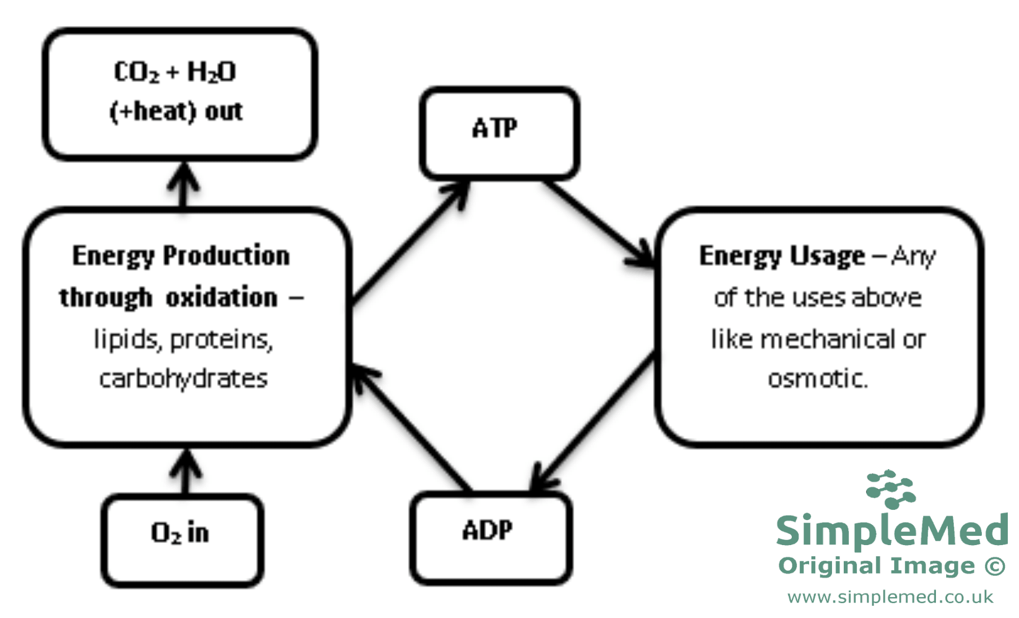 ATP-ADP REDOX conversion cycle diagram SimpleMed