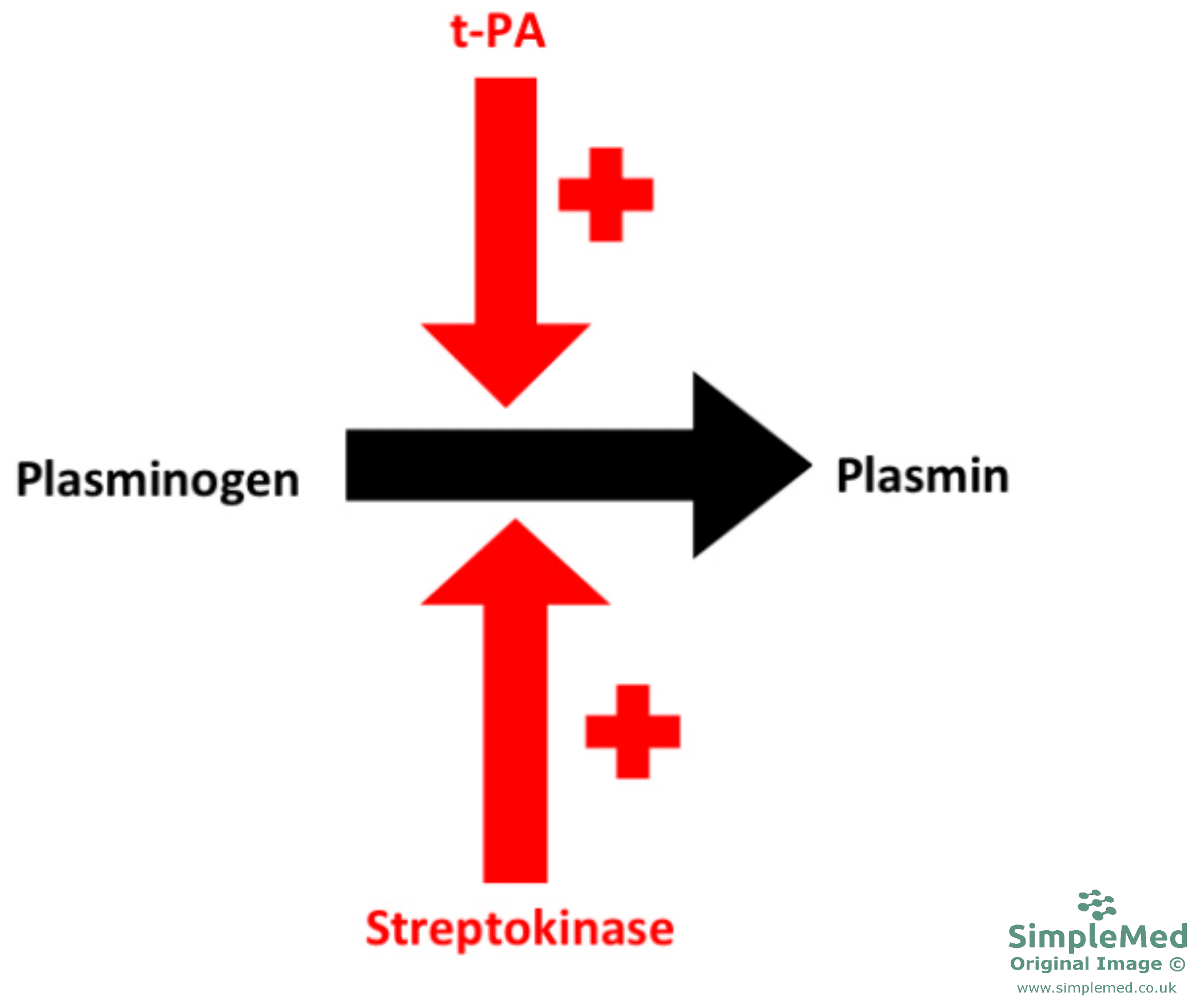 Plasminogen to Plasmin Diagram SimpleMed
